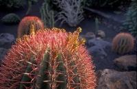 Cactus Garden_15