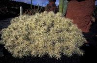 Cactus Garden_16