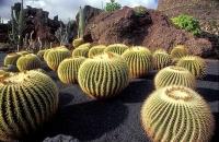Cactus Garden_18
