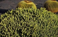 Cactus Garden_8